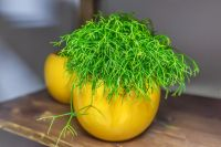 Get the most out of your Rhipsalis